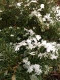 snöen