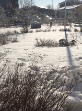 vinter trädgård