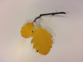 gula löv