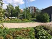 trädgården oklippt